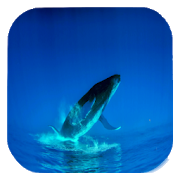 Blue Whale Video Live Wallpaper APK