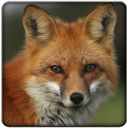 Sounds Fox APK