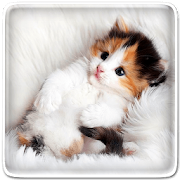 Cat Live Wallpaper App In Pc Download For Windows 7 8 10 And Mac