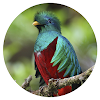 iMonteverde - Costa Rica Latest Version Download