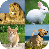 Animal quiz - Animal matching For PC