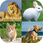 Animal quiz - Animal matching 3.0 Android Latest Version Download