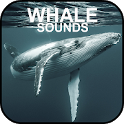 Whale Sounds 2.0 Android Latest Version Download