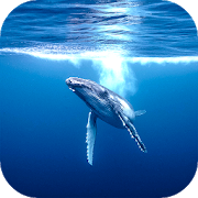 Blue Whale Bomb Blast  Latest Version Download