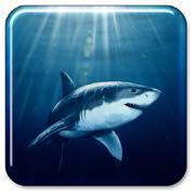 Shark live wallpaper app in pc download for windows 7, 8, 10 and mac.