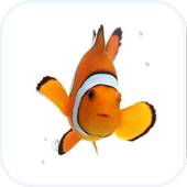Clown Fish Animated Keyboard Latest Version Download